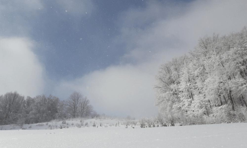 Denník lokdaunistu, časť deviata: Regetovka, 13. február 2021