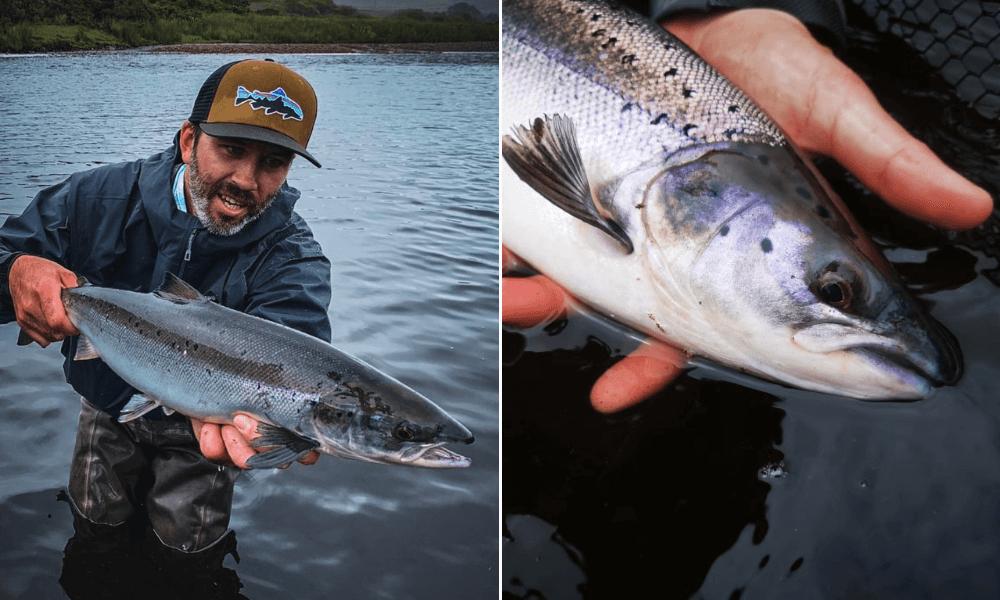 Tomáš Pastorek - lov lososa